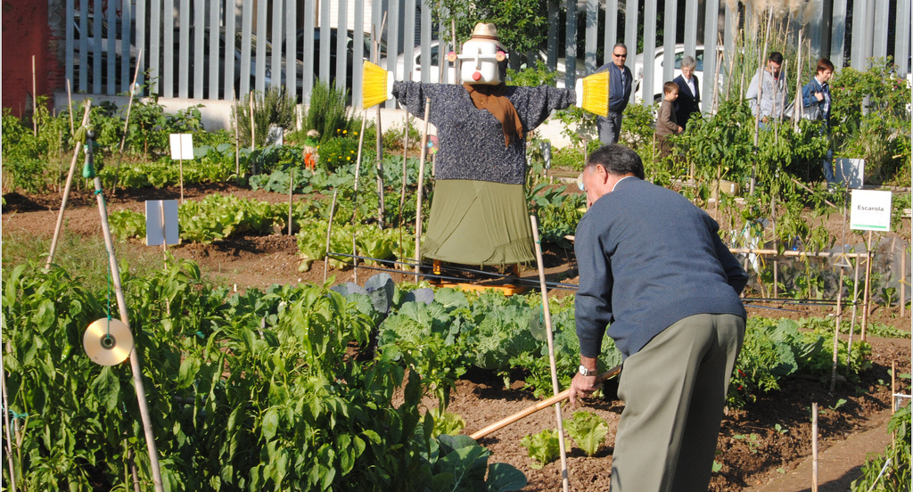 Alcobendas elige arroyo de la vega para los huertos urbanos for Jardin de la vega alcobendas
