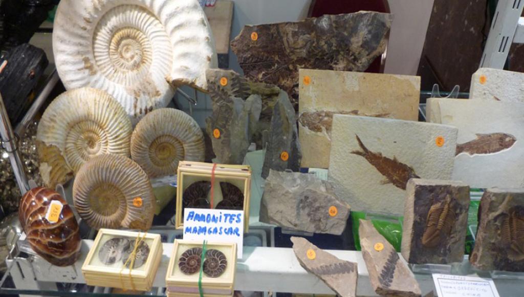 Expo Natura vuelve la feria natura 2013