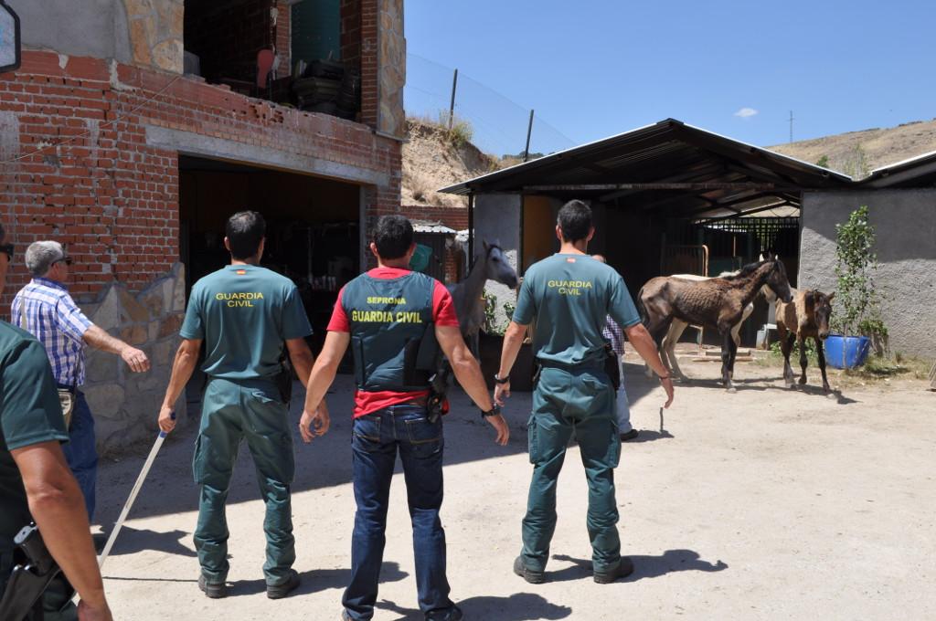 guardia civil seprona caballos