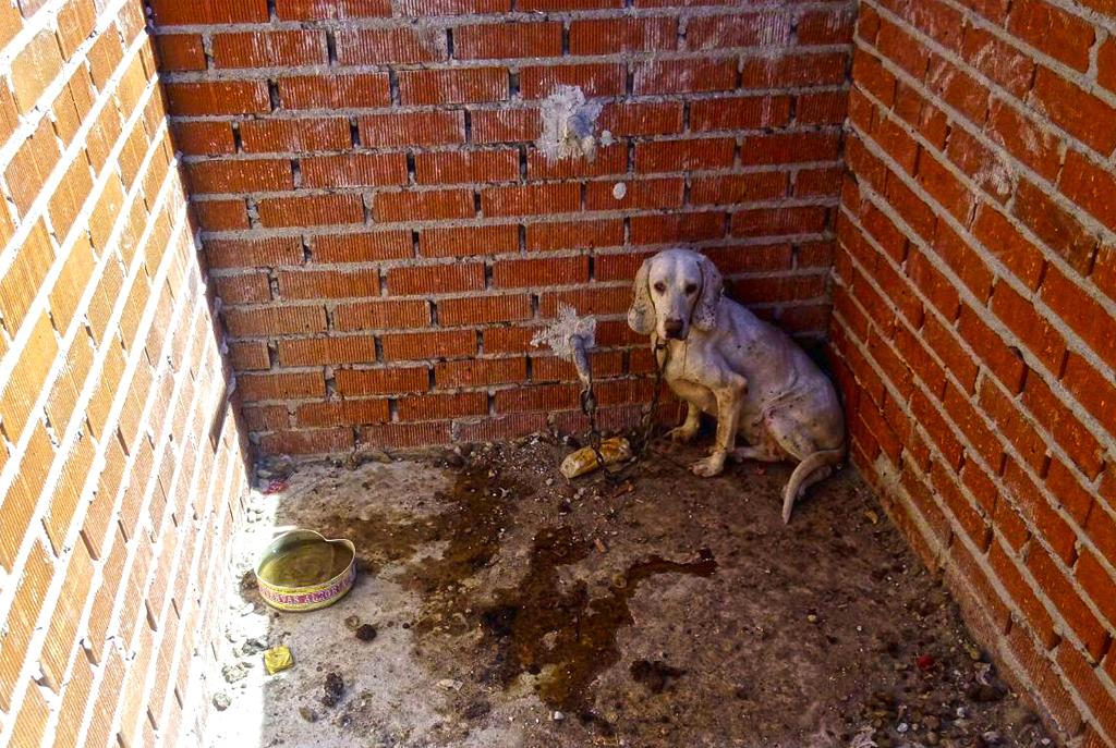 Cheniles de 2 x 1 metros, donde encerraba hasta 7 perros