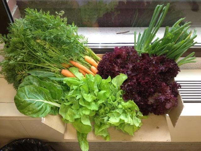 Consejos para cultivar tu huerto en la terraza - Huerto en la terraza ...