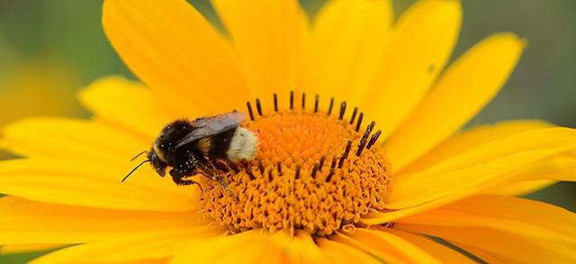 polen flor