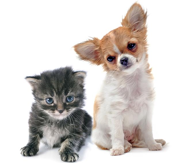 perro-gato-mascota