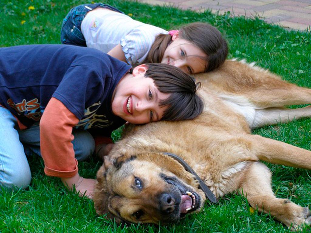 La mayor a de los ni os son m s felices con una mascota en casa - La casa de la mascota ...