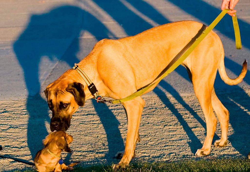 perro-correa-mascotas
