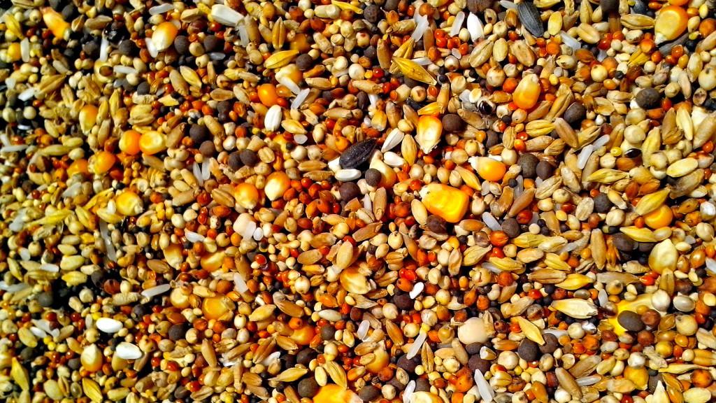 Las semillas fundamentales en la adaptaci n de las for Plantas fundamentales