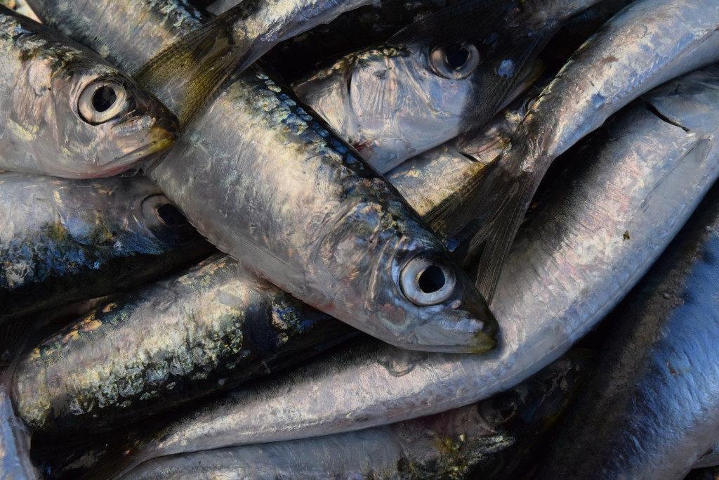 sardinas del Mediterráneo