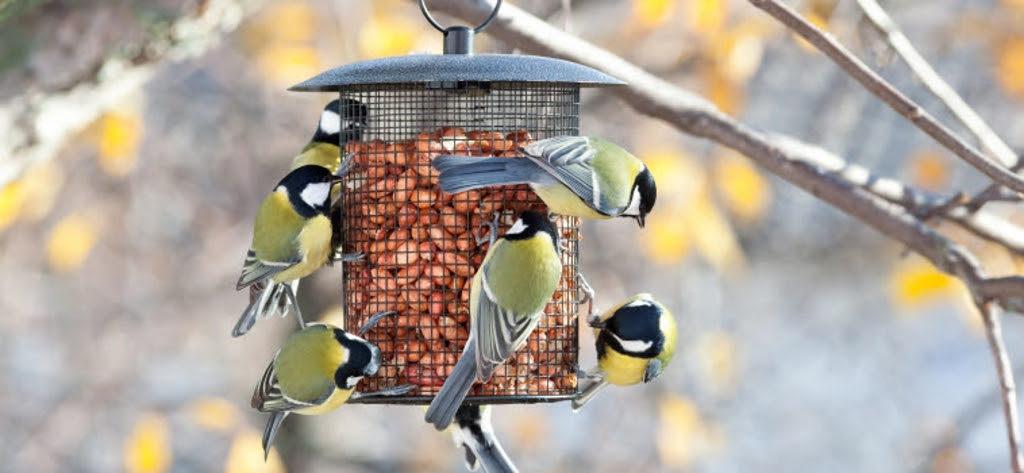 aves agrícolas